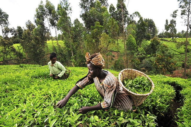 Agri-startup SheFarms launches crowdfunding campaign to empower female farmers