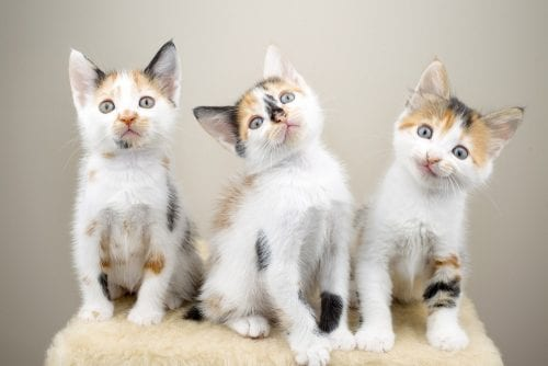 Meow! Dutch startup Poopy Cat scooped up by largest pet supplier in The Netherlands