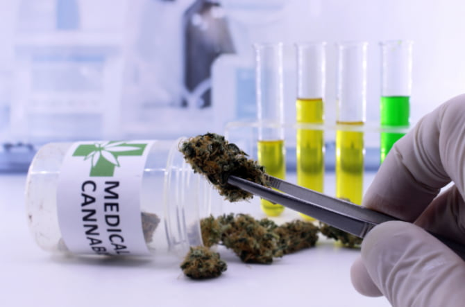 These 10 European medtech startups are cashing in on cannabis