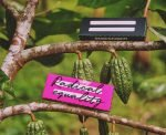 Founder of Dutch startup Moyee Coffee has now come up with blockchain chocolate